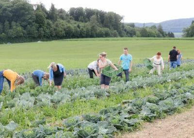 People harvesting on a farm (SoLaWi)
